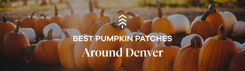 Best pumpkin patches around Denver